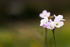 Prato del fiore Fotografia Stock Libera da Diritti