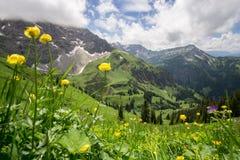 Prato del fiore alto su nelle montagne Fotografia Stock