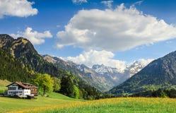 Prato del fiore e montagne innevate in primavera Fotografia Stock Libera da Diritti