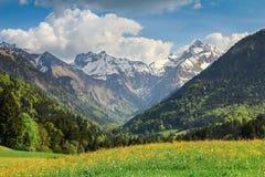 Prato del fiore e montagne innevate in primavera Immagini Stock Libere da Diritti