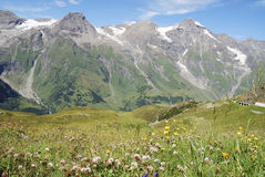 Prato del fiore nelle alpi Fotografia Stock Libera da Diritti