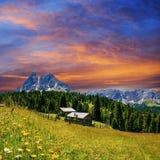 Prato del fiore nelle alpi al tramonto Fotografia Stock Libera da Diritti