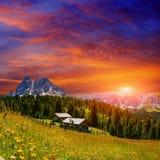 Prato del fiore nelle alpi al tramonto Immagine Stock