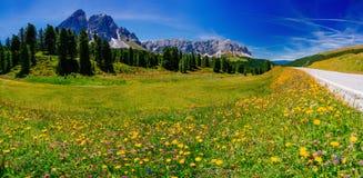 Prato del fiore nelle alpi al tramonto Fotografie Stock