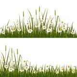 Prato del fiore selvaggio royalty illustrazione gratis