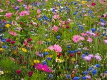 Prato del fiore selvaggio Fotografie Stock Libere da Diritti
