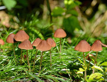 Prato del fungo Immagini Stock Libere da Diritti