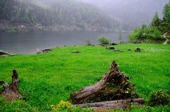 Prato del lago e vecchio tronco di albero Immagine Stock