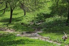 Prato del paese nel tempo di primavera Fotografie Stock