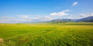 Prato del plateau di Qilian di estate fotografia stock libera da diritti