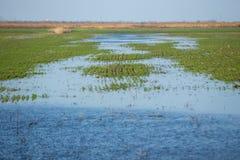 Prato del terreno alluvionale Fotografia Stock