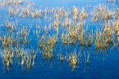 Prato dell'acqua con erba crescente Fotografia Stock