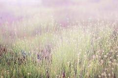 Prato dell'erba di estate Fotografia Stock Libera da Diritti