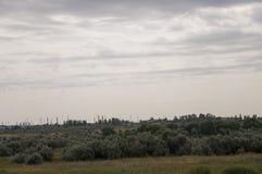 Prato dell'oro con gli alberi verdi soli lontano ed il cielo tenero calmo blu qui sopra Erba asciutta gialla Pali elettrici nel c fotografia stock