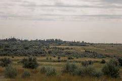 Prato dell'oro con gli alberi verdi soli lontano ed il cielo tenero calmo blu qui sopra Erba asciutta gialla Pali elettrici nel c fotografia stock libera da diritti