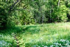 prato della campagna di metà dell'estate con i fiori Immagine Stock