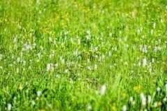 prato della campagna di metà dell'estate con i fiori Fotografia Stock