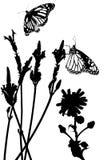 Prato della farfalla Immagini Stock Libere da Diritti