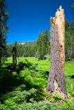 prato della foresta Fotografia Stock
