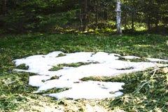 Prato della molla della foresta con neve di fusione Fotografie Stock
