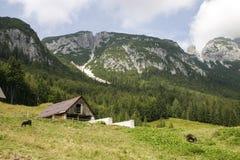 Prato della montagna Fotografia Stock Libera da Diritti