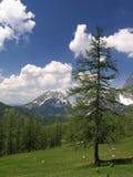 Prato della montagna Fotografie Stock