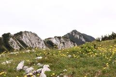 Prato della montagna Immagine Stock