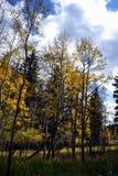 Prato della montagna con gli alberi Fotografia Stock Libera da Diritti