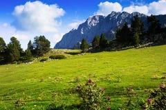 Prato della montagna contro il supporto della roccia di estate Fotografie Stock