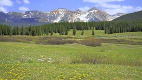 Prato della montagna del Colorado Fotografie Stock Libere da Diritti