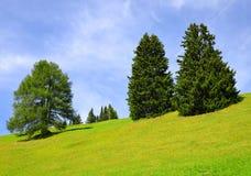 Prato della montagna della primavera con gli alberi Fotografia Stock Libera da Diritti