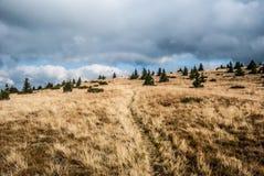 Prato della montagna di autunno con i piccoli alberi, traccia di escursione e cielo blu con le nuvole in montagne di Nizke Tatry  Immagine Stock