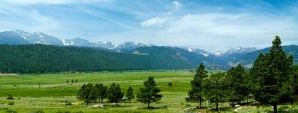 Prato della montagna di Colorado Fotografie Stock