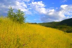 Prato della montagna di estate immagine stock