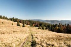 Prato della montagna di Hala Rycerzowa con il chalet, colline sui precedenti, alberi variopinti e chiaro cielo in mounta di Beski fotografia stock
