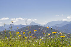 Prato della montagna nelle pre-alpi bavaresi Immagine Stock Libera da Diritti