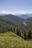 Prato della montagna nelle pre-alpi bavaresi Fotografia Stock Libera da Diritti