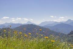 Prato della montagna nelle pre-alpi bavaresi Fotografia Stock