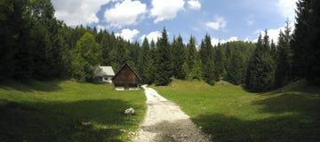 Prato della montagna sopra il lago Bohinj nelle alpi di Julian Fotografia Stock Libera da Diritti