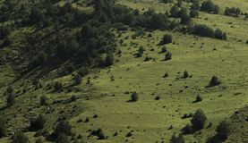 Prato della montagna su cui le mucche pascono immagini stock libere da diritti