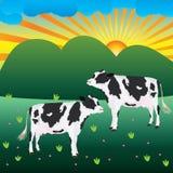 Prato della mucca Immagine Stock