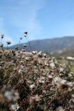 Prato della primavera Fotografia Stock
