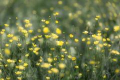 Prato della primavera Immagine Stock Libera da Diritti