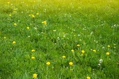 Prato della primavera con i denti di leone ed altri fiori della molla Vista panoramica di bei prati verdi freschi e dei fiori di  fotografia stock