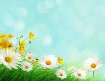 Prato della primavera con i fiori selvaggi Fotografia Stock Libera da Diritti