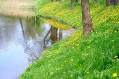 Prato della sorgente. fotografie stock