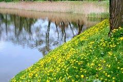 Prato della sorgente. immagine stock