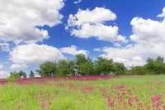 Prato della sorgente con i wildflowers in Bucha, Ucraina Immagini Stock