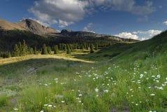 Prato della sorgente in montagne di San Juan in Colorado Immagine Stock