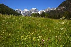 Prato della sorgente nelle alpi Fotografie Stock Libere da Diritti